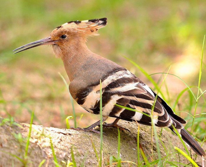 10 Птиц ссамыми необычными защитными механизмами