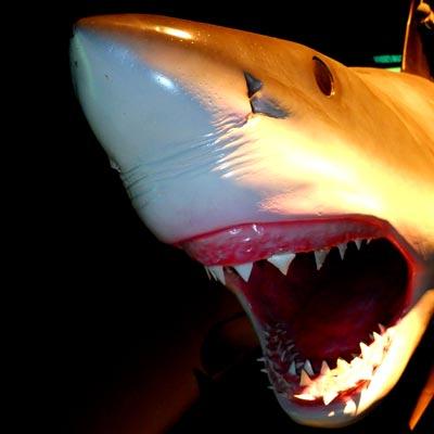Акула — хищник или жертва?