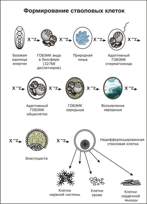 Австралийские ученые получили больше информации взаимодействии биологических клеток с наночастицами