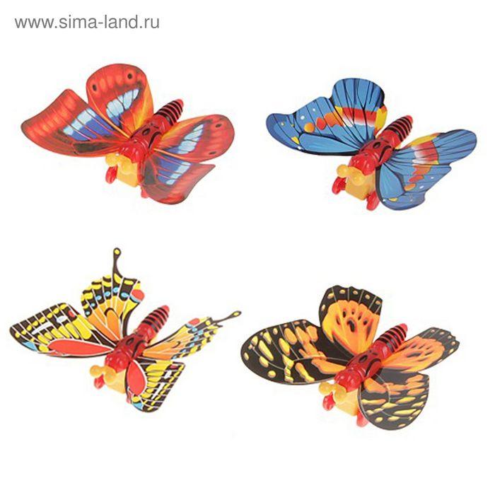 Бабочки растут на дорожной соли