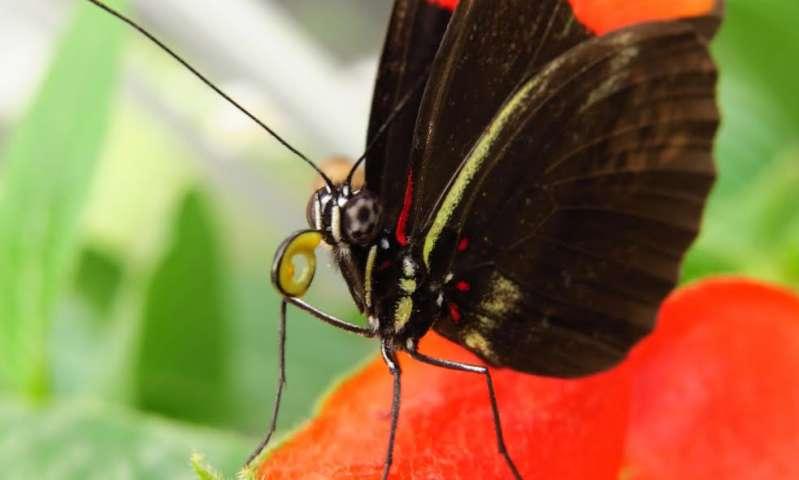 Бабочки выбирают растения для гусениц по форме листьев