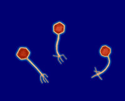 Бактерии и вирусы меняют свой генетический код