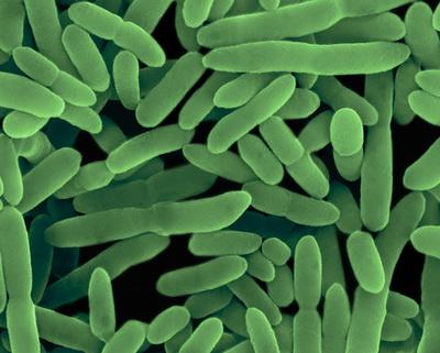 Бактерии помогают сохранить кожу здоровой