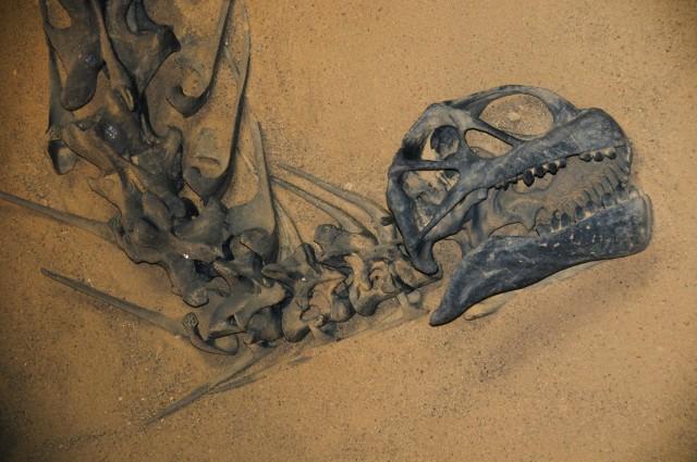 Белки динозавров сохранились до наших дней