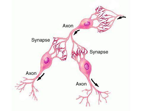 Бесконтактная коммуникация клеток мозга