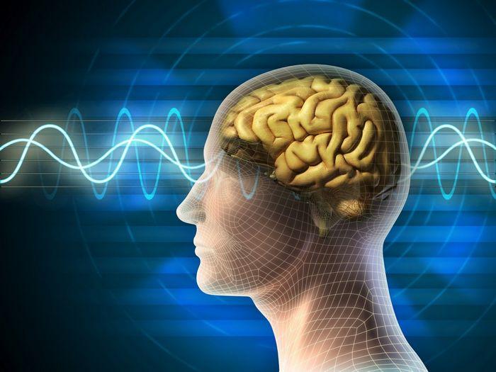 Биологи нашли выключатель чувства голода в мозге человека