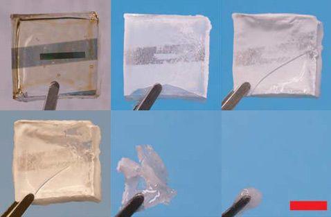 Биоразлагаемые микрочипы