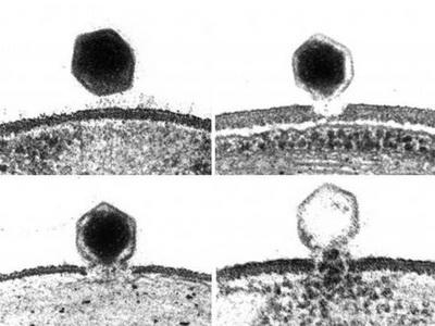 Что делает с нашим мозгом вирус из водорослей