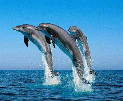 Дельфины знают, как зовут их сородичей