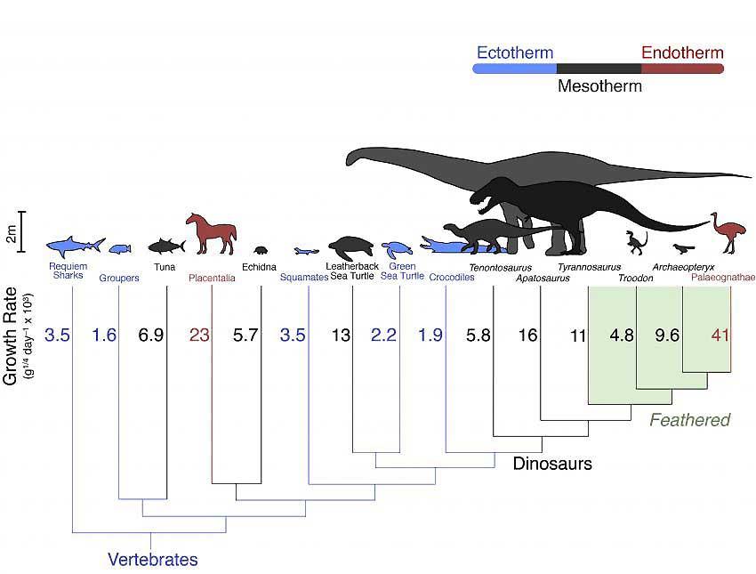 Динозавры были полутеплокровными