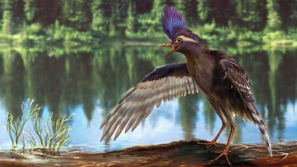 Древнейшую настоящую птицу нашли в китае