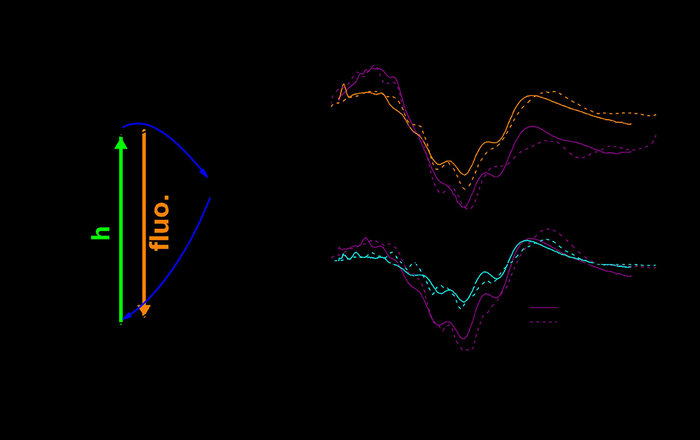 Физики смогли рассчитать динамику сверхбыстрых фотоиндуцированных реакций