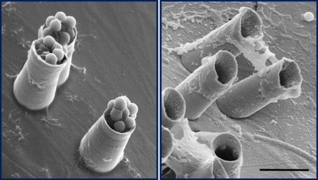 Химики создали работающую микропушку 611060690300-го калибра