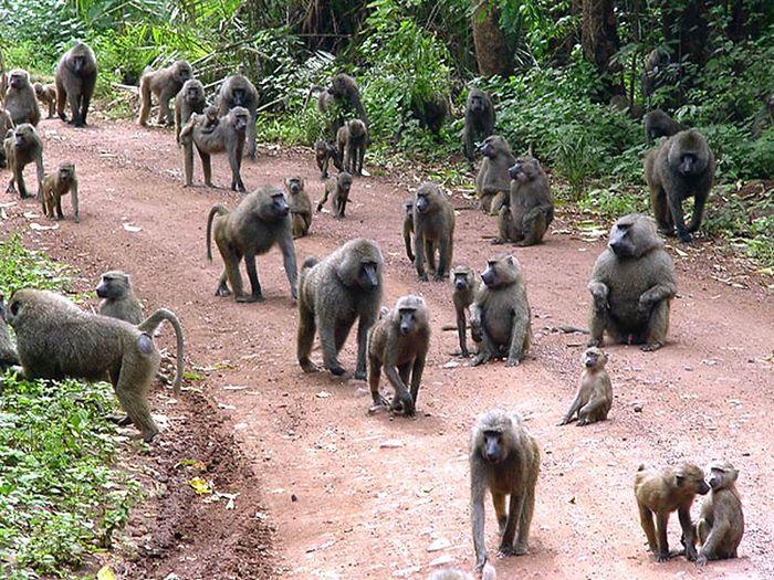 Исследования на обезьянах закончились