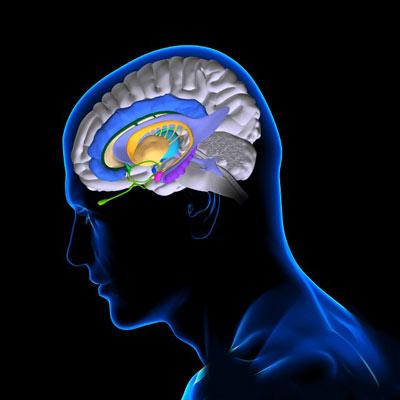 Как чувствительность к стрессу зависит от работы мозга