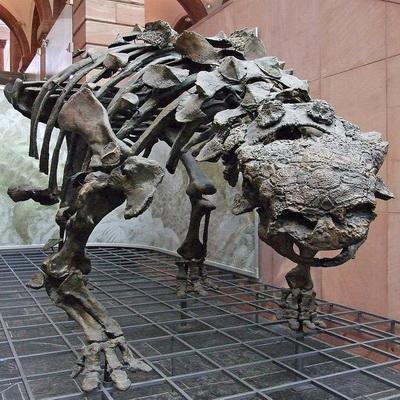 Как динозавры охлаждали мозг