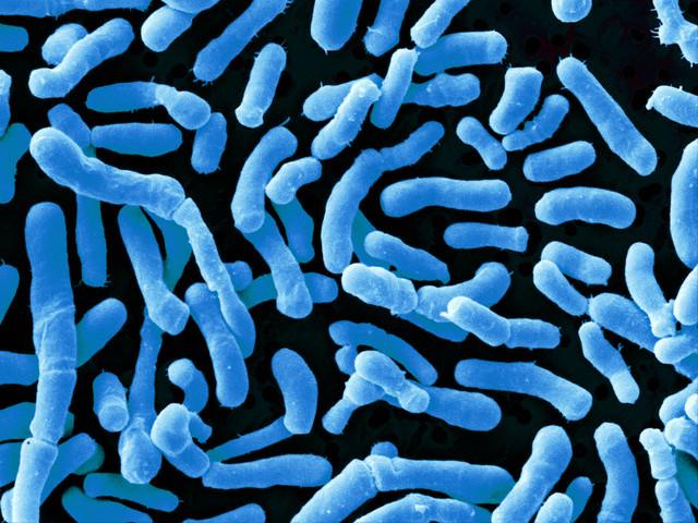 Как кишечные бактерии помогают лечить рак