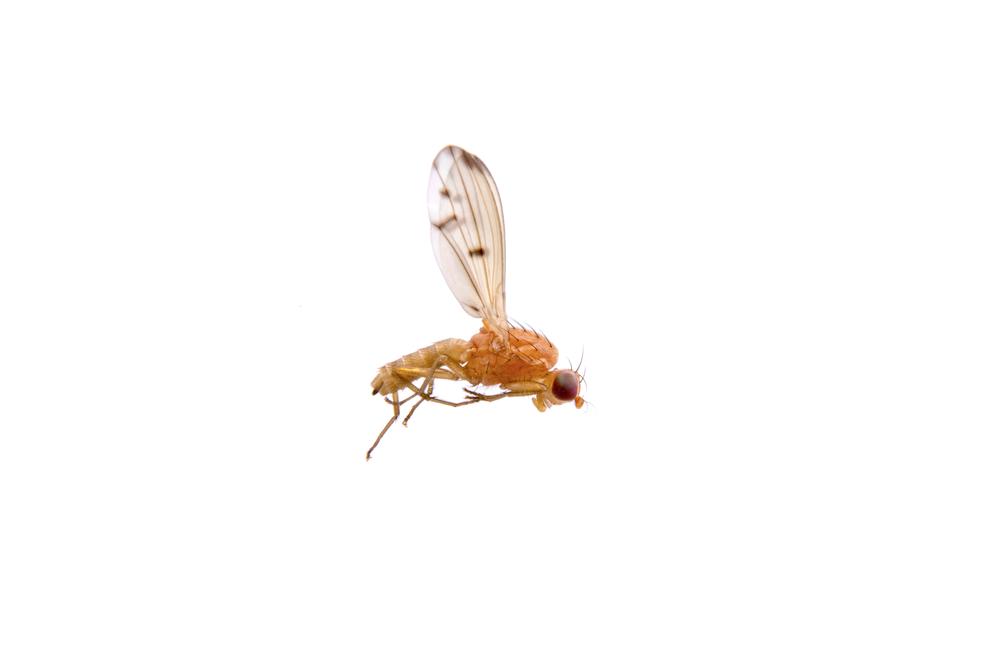 Как летает муха