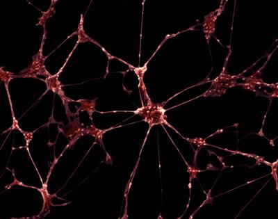 Как нейроны запоминают вкус