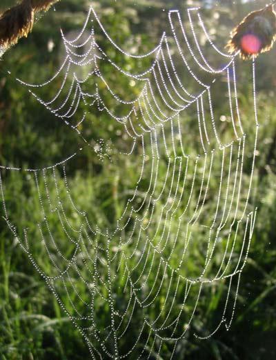 Как пауки делают паутину