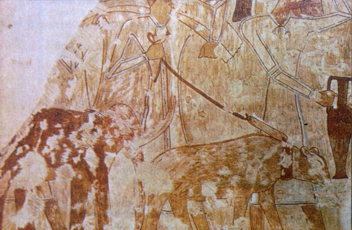 Как в древнем египте портилась экология