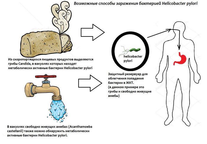 Кишечная бактерия полностью контролирует поведение человека