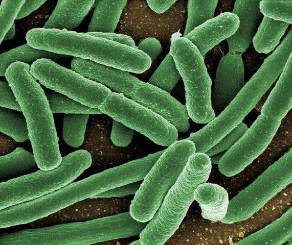 Кишечные бактерии вызывают депрессию
