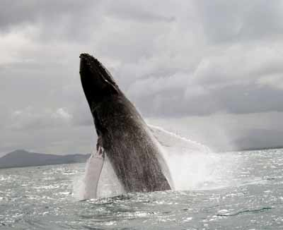 Китовые страсти