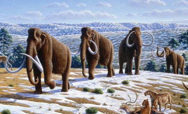 Климат оправдали «по делу об убийстве» мамонтов