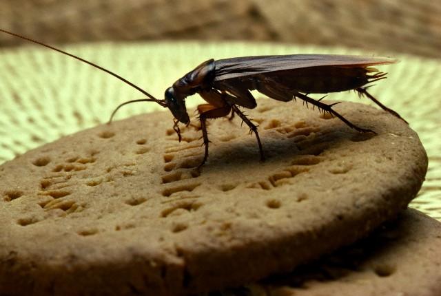 Когда таракан становится личностью