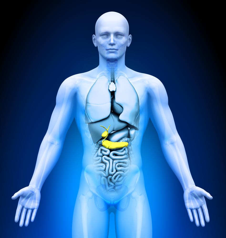 Колыбель для поджелудочной железы
