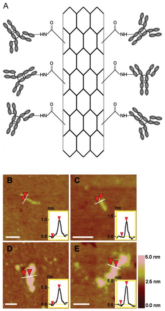 Комплекс из нанотрубок и антител уничтожает клетки рака молочной железы