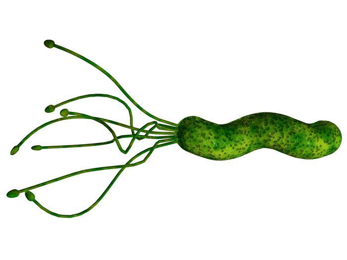Кожные бактерии снюхались с клетками иммунной системы