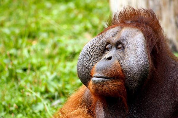 Люди оказались «энергичнее» обезьян