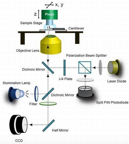 Модернизация атомно-силового микроскопа позволила наблюдать за деятельностью нейронов практически в реальном времени