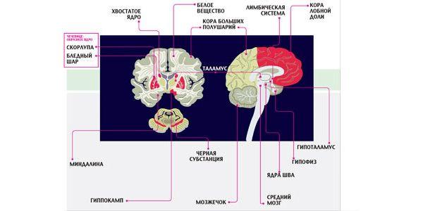 Мозг человека: программы ивирусы