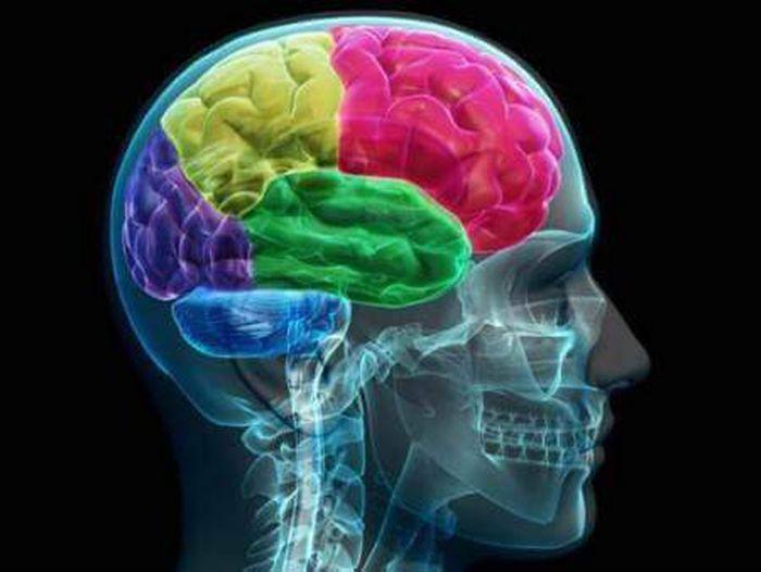Мозг человека впервые смог управлять движениями другого (видео)