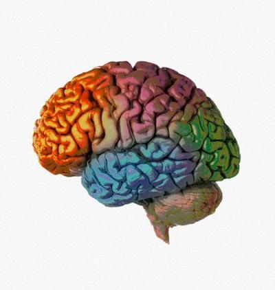 Мозжечок помог человекообразным обезьянам стать умнее