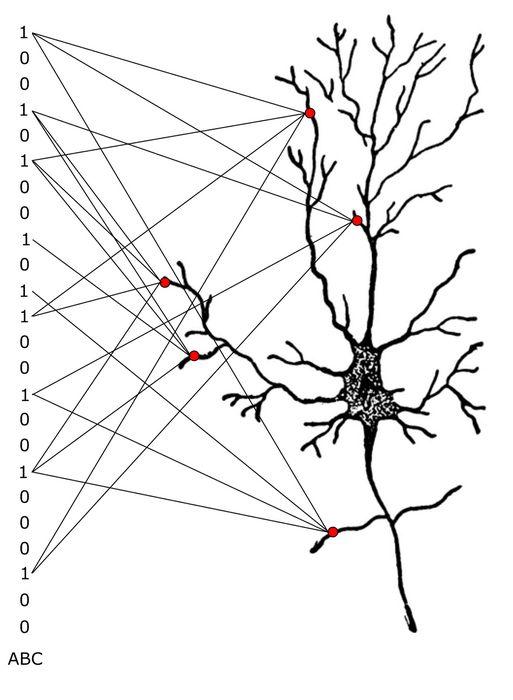 Мысль заставляет нейроны работать вместе