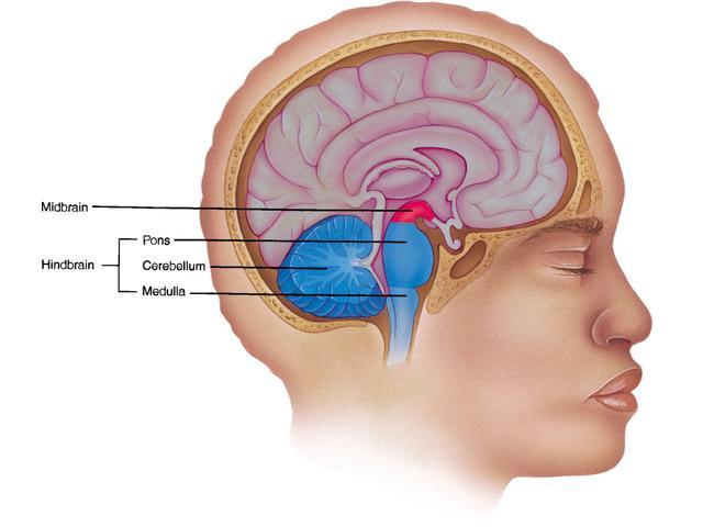 Найдены нейроны, проводящие страх