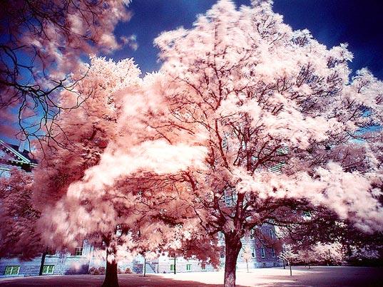 Наночастицы золота превратят деревья в уличные фонари