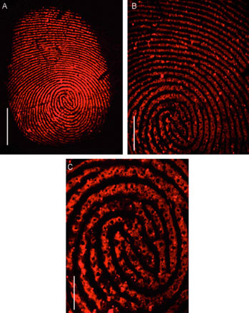 Нанотехнологии повышают точность методов проявления скрытых отпечатков пальцев.