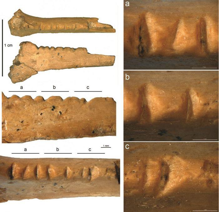 Неандертальцы оказались первыми птицеедами