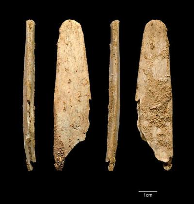 Неандертальская «инновация» и сегодня в ходу у скорняков