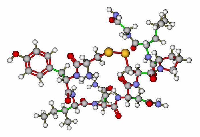 Новая роль гормона любви окситоцина