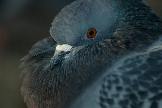 Обзор недели. птицы