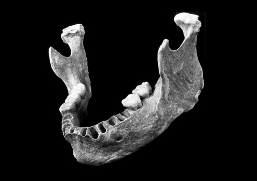 Один из древнейших сапиенсов-европейцев оказался праправнуком неандертальца
