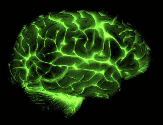 Один мозг хорошо, а три – лучше