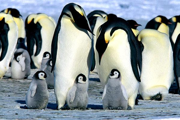 Пингвины меняют свой рацион