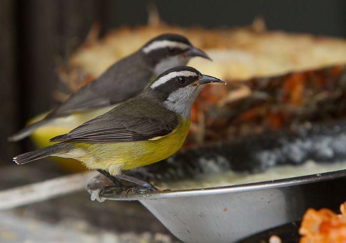Почему колибри любят сладкое